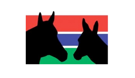gambia-horse